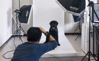In Pet Visuals, pet photography shows the love affair between pet and owner