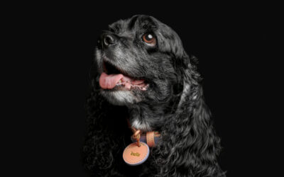 India: the competition-winning Cocker Spaniel who thrives on challenges