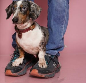 Basha loves the pose on PawMom's feet
